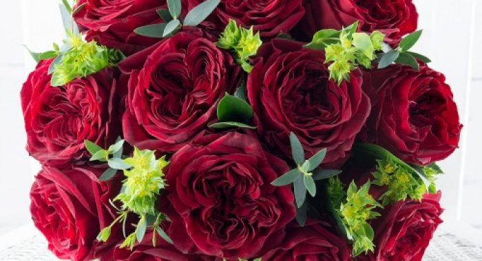red_garden_roses